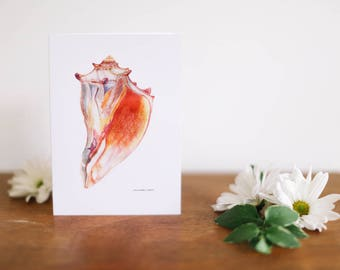 Giant Conch Shell Greeting Card and Note Card