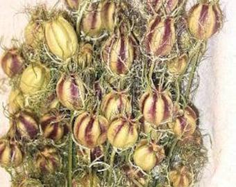 Dried Nigella Flowers | Dried Love in a Mist Flowers | Dried Flowers | 4 oz Nigella