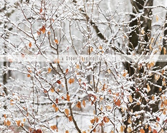ON SALE Winter White Snowy Trees Digital Background for Photographers, Winter Woods Background, Trees Backdrop, Digital Backdrop