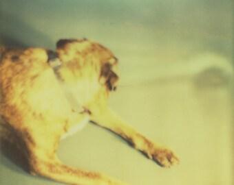 Dreamy Dog photo