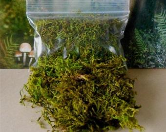 Fairy Garden Moss~Preserved Moss~Sheet Moss~Floral Supply Moss~Miniature Garden Moss~Dyed Moss