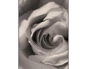 Rose Print, Sepia Photography, Black and White Photo, Wedding Decor,  Floral Art Print, Rose Wall Decor, Bedroom Art
