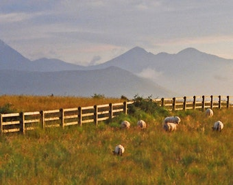Irish Mountains, Sheep Photo, Ring of Kerry, Macgillycuddy Reeks, Irish Decor, Wall Photo, Art Print, Landscape Decor, Blue And Green