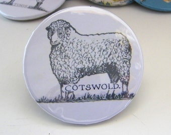 Sheep Pin - Badge - Cotswold - from the  1939 Wool Map
