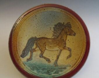 Side Plate Gaited Bay Icelandic Horse in Meadow