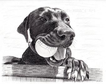 "Two Custom graphite pencil pet portraits 8"" x 10"""