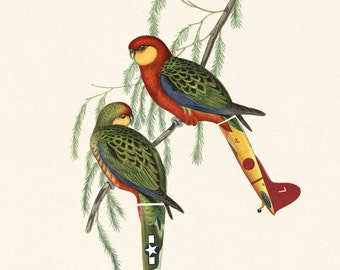 Aichi D3A2 & Bell P3G - Limited Edition Print - Tropical, Summer, Red, Green Parrot Macaw Illustration - Travel, Bird Plane Inspired Collage