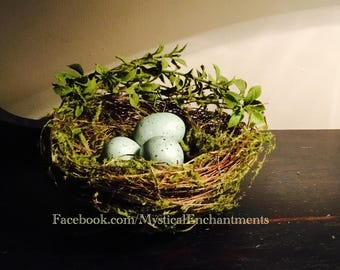 Large Spring Mossy Birds nest with teal blue Robin's eggs - 5 -6""