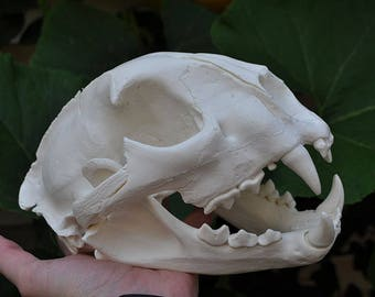 Beautiful Hand Made Mountain Lion Skull Replica