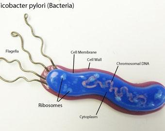 Helicobacter pylori Bacteria Fused Glass Pendant Pin Magnet Ornament