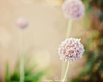 Threesome Fine Art Photograph Pastel Lavender Flowers in a Field SQUARE Looks Great As LARGE wall art or on Canvas