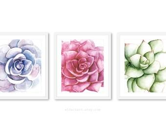 Succulent Art, Succulent Wall Art, Plant Art, Cactus Print, Plant Art, Succulent Print - Set of 3 Prints - Frames not included - 5x7 or 8x10