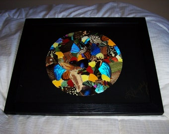 "Real Butterfly Wings Framed "" Cosmos ""  Collage"