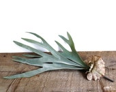 Staghorn fern, artificial plant, air plant, fern plant, artificial plant, succulent wall art