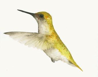Original Watercolor Painting Yellow Humming Bird