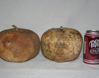 Two Apple Gourds, Uncleaned