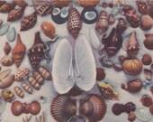 Florida Sea Shells- 1940s Vintage Postcard- Tropical Florida- Gulf of Mexico- Beach Decor- Beachcomber- Shell Collector- Paper Ephemera