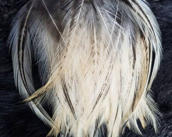Gold Badger Hackle Feathers - Lot of 50