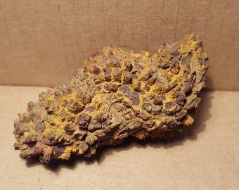Beautiful Coprolite (Dino POOP) Specimen