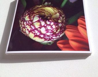 Square Greeting Card - Ranunculus Multi