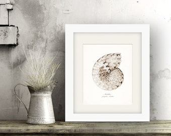 Coastal Decor EH Antique Nautilus Sea Shell, Nautical Style, Beach Style Giclee Print