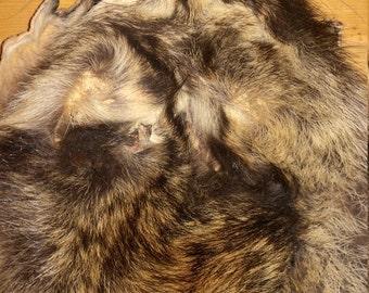 Real animal Tanned raccoon Fur Pelt skin hide rug part weird man cave