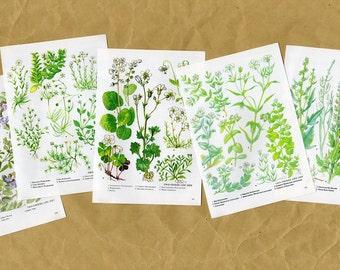 Vintage WALL ART SET of 5 Green Botanical Plant prints
