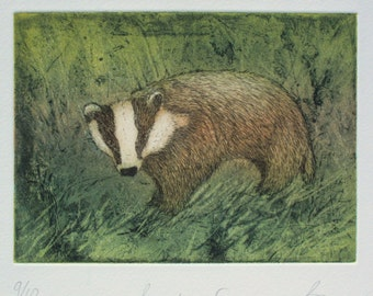 Badger Etching. Full colour wildlife print.