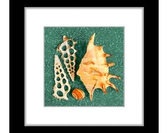 Sea Shells 5