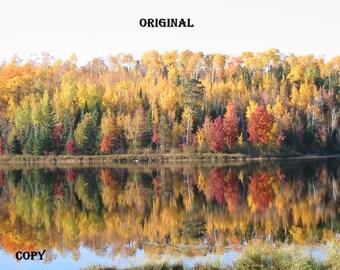 Custom Order For UV, Birch Branch Triptych