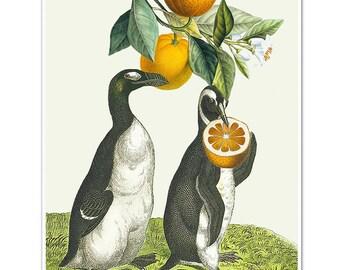 Oranges2 - Penguin print, Mixed media Decorative art, Animal painting, drawing, illustration, portrait, POSTER 8x10
