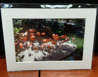 pink flamingos photo