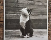 Original Vintage Photograph Stargazer Kitty