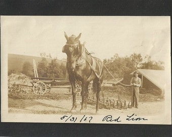 Mighty Red Lion - Antique 1910s Farmer and Work Horse Sepia Silver Gelatin Print Photograph, Mounted