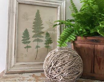 Vintage Style Botanical Print Fern