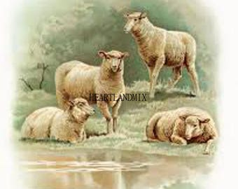 Vintage Sheep illustration, Farmhouse Wall Art download printable image