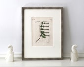 Reserved for Annie: 1796 Antique Botanical Engraving Published in Lyon, France Belleval Framed 11 x 14 inches