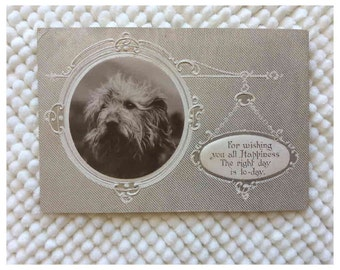 Post Card Antique 1900's Pet Dog Embossed Greetings Postcard