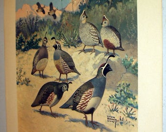 Lynn Bogue Hunt 1944 Game Birds Original Lithograph Print Grouping of Western Quail Large Print Field and Stream Company