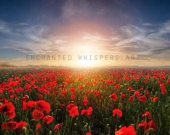 fantasy meadow poppy field background