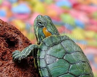 Sea Turtle - Digital Download - Wall Art - Print On Demand - Home Decor - Turtle Print  - Tropical Art