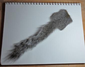 Squirrel Tail Taxidermy Craft Supply, Fur Scrap, Tanned Squirrel Hide, Weird Taxidermy