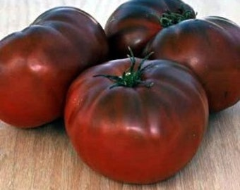 VTHB) BRANDYWINE-BLACK Tomato~Seeds!!!~~~~~~Great Heirloom Color & Taste!