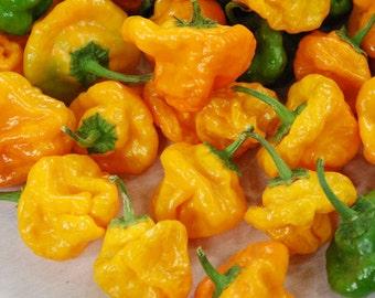 VPPH) SCOTCH BONNET Hot Pepper~Seed!!~~Caribbean Dynamite!
