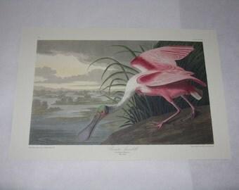 Audubon print unframed bird roseate spoonbill reproduction