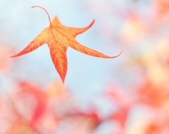 "Autumn Leaf nature photography notecard - 5x7"" frameable"