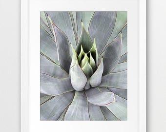 Succulent Plant Print, Desert Plant Print, Botanical Art, Cactus Decor, Agave Photography, Modern Wall Art, Home Office Decor, Printable Art