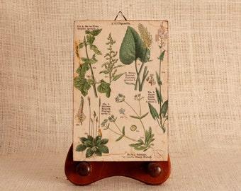 Botanical Print, Vintage Wall Art, Antique botanical, Vintage Print, Flower print, art print, kitchen wall art, wall decor vintage art