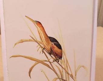 50% Off Estate Sale Vintage Least Bittern 1960s Frameable Picture, Wall  Art Print of Bird Watercolor by  J.F. Lansdowne Item 506