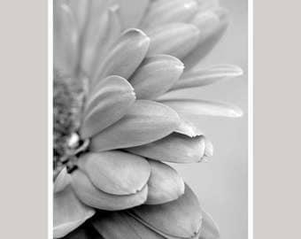 Black and white flower print modern art print floral photography, daisy flower artwork, grey wall art vertical print monochromatic art decor
